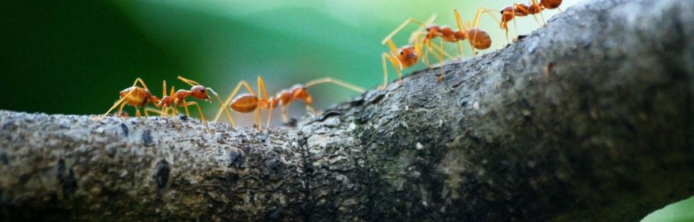 Myrer